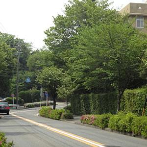 緑いっぱいの街並み