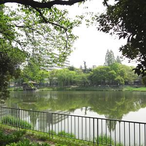 桜の名所、隼人池はお散歩コース